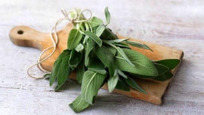 Градинският чай полезен и в гозбите