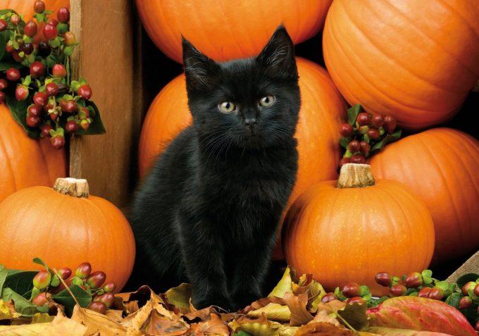 Тиква – любимото лакомство на есента